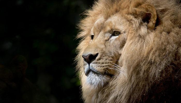 inside cannes lions
